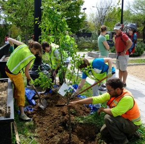 Photo courtesy: www.caseytrees.org