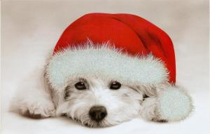 Happy-Holidays-dogs-26334003-1088-694