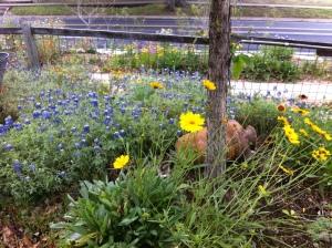 Spring Flowers IMG_1045