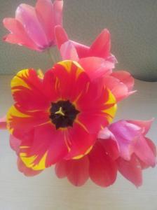Flower Adolph 20150403_075733