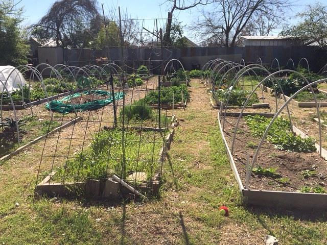 Garden IMG_1670