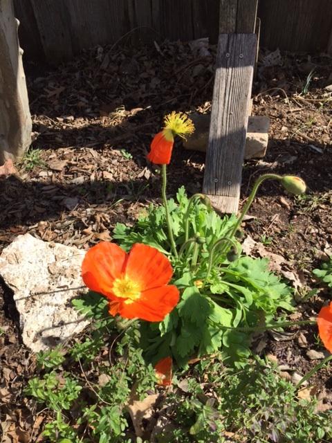 Orange Flower IMG_1591