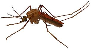 Mosquito index