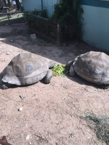Zoo turtles IMG_0571